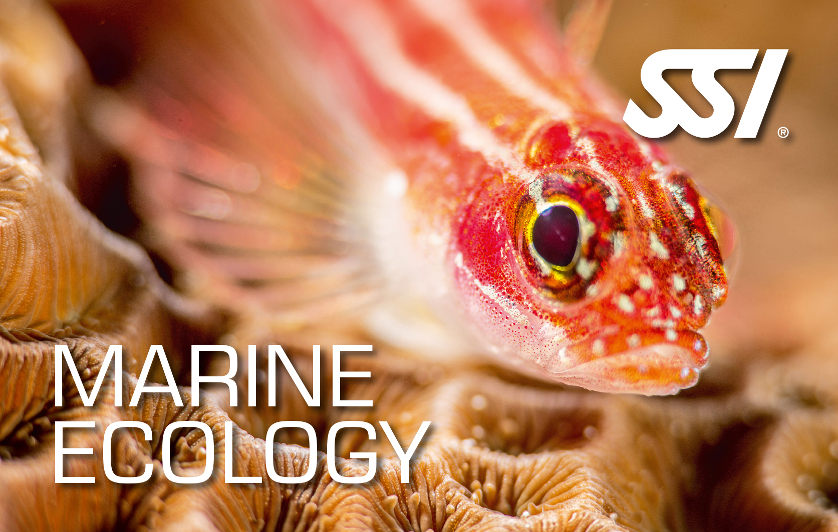 SSI Marine Ecology certification card