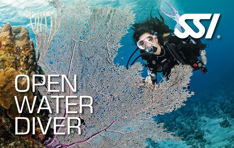 junior and adult open water diver