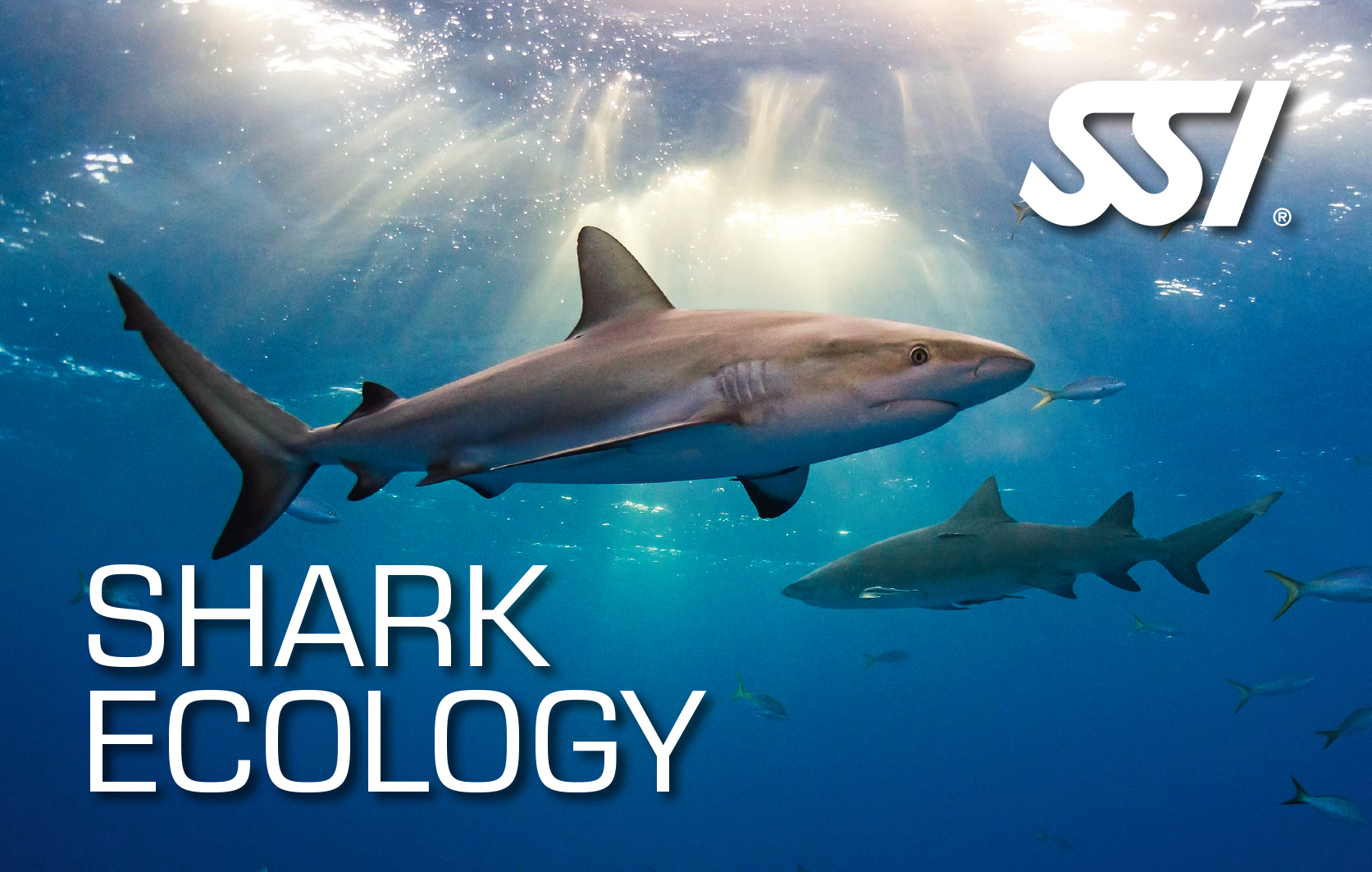 SSI Shark Ecology certification card